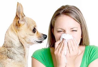 Identifying Allergic Asthma Triggers